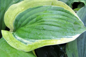 Elbridge Gerry, Hosta